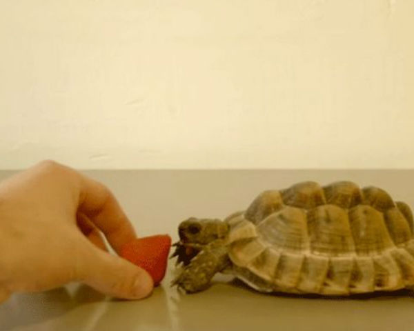 Alan Rickman Tells The Story Of A Tortoise Eating A Berry