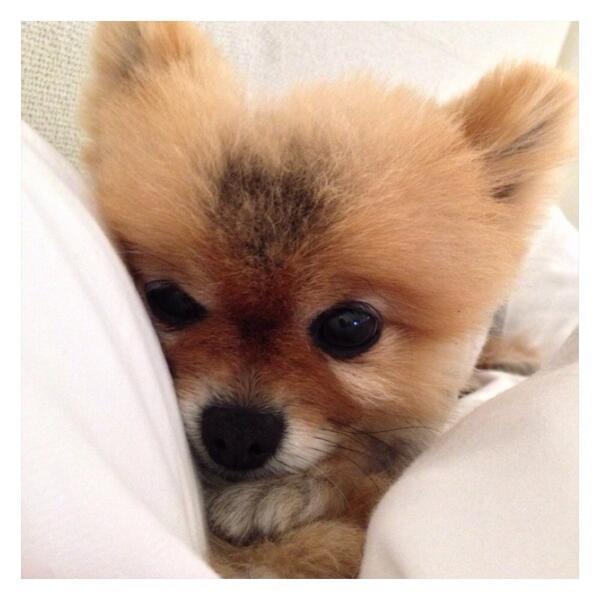 Lea Michele Puppy Dog Pearl