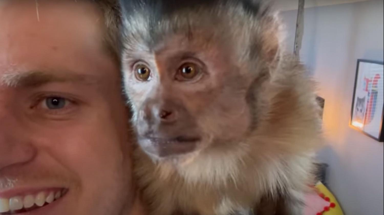 George The Monkey