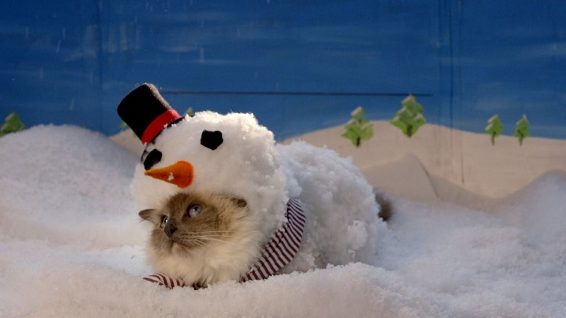 Cats, Christmas And Costumes!